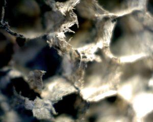 44301-wasp-nest